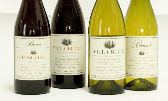 Una parte della batteria dei vini di Villa Bucci