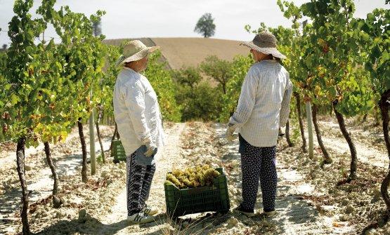 Terreni differenti per vini dalle tantissime sfaccettature