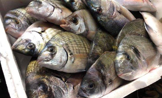 Un esempio di pescato quotidiano da Tuccino