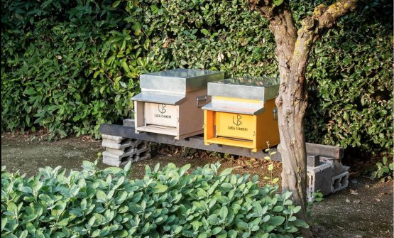 Le arnie per il miele di Andreina,realizzate in collaborazione l'azienda biologica Luca Bianchi