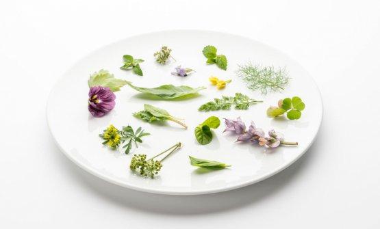 Ventaglio di botaniche al Rose Salò