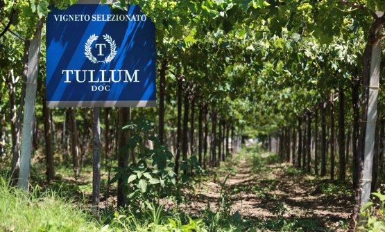 Docg Tullum in Abruzzo: piccolo è meglio. Parola di Feudo Antico