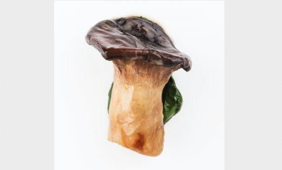 Cardoncello e prezzemolo (2016) Un altro alimento, in questo caso non un vegetale ma un fungo (che ha il suo regno a sè), che assurge a secondo piatto, a portata