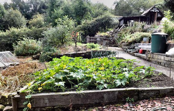 Un'intera città edibile: non è un sogno irrealizzabile, ma l'ambizioso progetto, chiamato Incredible Edible, di Pam Warhurst, che a Todmorden in Inghilterra è riuscita a coinvolgere amministrazione e cittadinanza nella creazione di moltissimi spazi di coltivazione condivisa