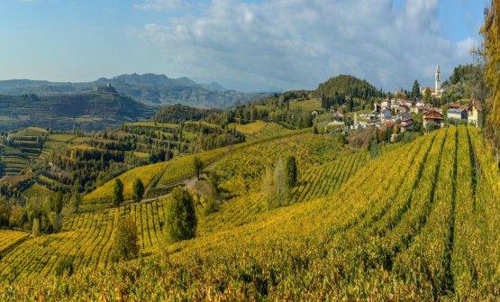 Le vigne di Castelcerino