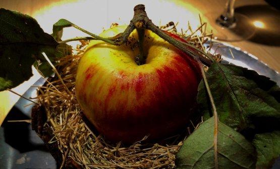 Apple salad 1 Il primo piatto del menu Game & Forest si presta a più significati. In principio era la mela, diremmo biblicamente. Il frutto è quindi il simbolo dell'inizio, qualcosa di fresco che prepara al dopo, il debutto freddo che non t'aspetti in un sentiero lastricatoda cervi, renne e anatre