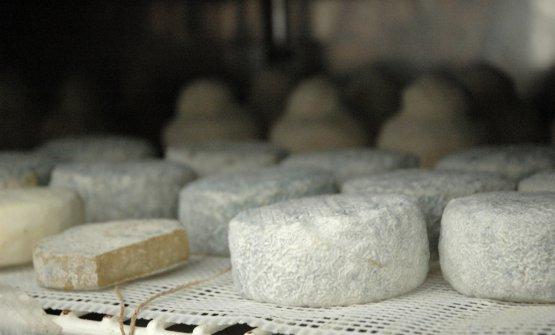 Stagionatura dei formaggi