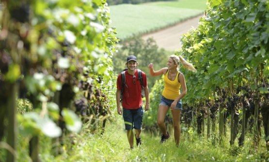 A spasso per le vigne: è una delle opportunità o
