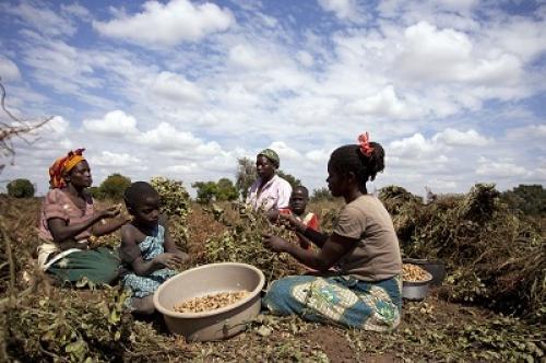 Leitmotiv di quest'anno: l'agricoltura familiare di piccola scala, tema Fao 2014