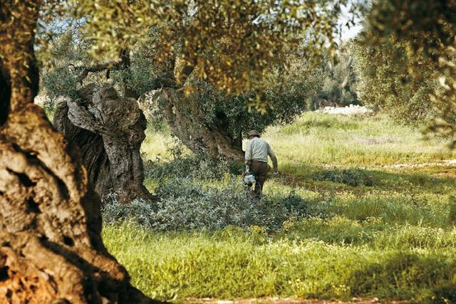 La natura, l'uomo, il lavoro: tre tasselli sui quali si fonda il successo di Alce Nero, l'azienda di Monterenzio, nel Bolognese (via del Lavoro�20, tel. +39.051.6540211) che sar� parner di Identit� Naturali �
