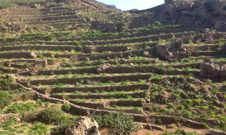 I classici terrazzamenti che rendono possibile la coltivazione dello Zibibbo sull'isola