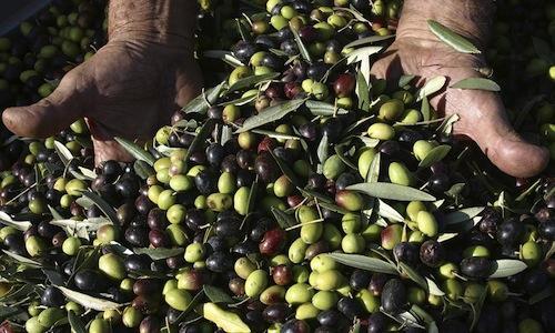 A livello mondiale, l'India � il primo importatore di olio d'oliva: negli ultimi 3 anni i valori sono cresciuti del 40-50. Sono i dati pi� rilevanti di una ricerca condotta da�Ceq-Consorzio Extravergine di Qualit�
