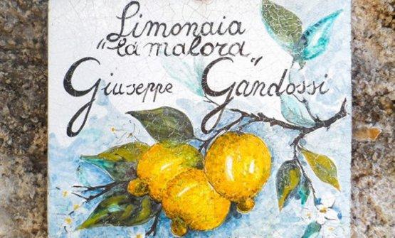 A Gargnano, alla scoperta dell'antichissima limonaia