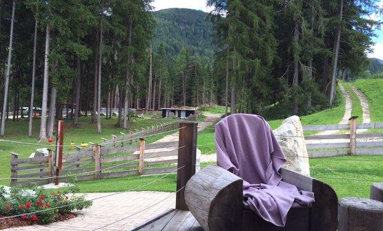 Il bosco e i prati tutt'attorno la realtà di Alpe Pragas a Braies in Pusteria