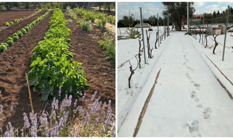 Troppo freddo anche in Puglia: i raccolti invernal