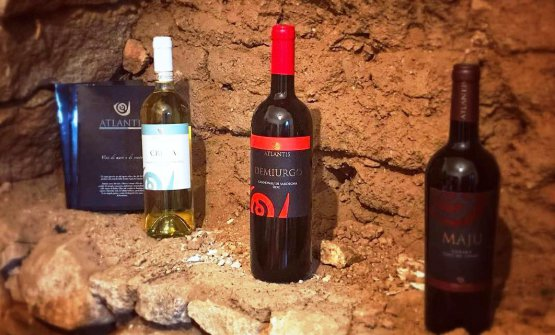 I vini dell'azienda