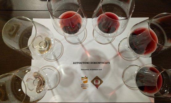 I vini realizzati con gli autoctoni quasi scomparsi della zona