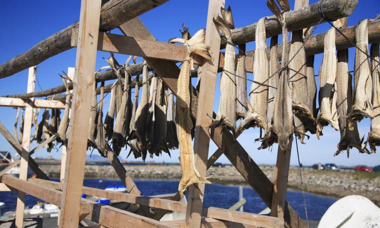Stoccafissi lasciati a essiccare alle isole Lofoten