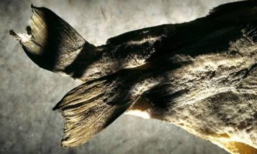 L'autentico baccal� � pescato all'amo e lavorato con cura e lentezza. I maestri nell'arte della salagione, conservazione e dissalatura sono gli spagnoli (foto�Stockfood)
