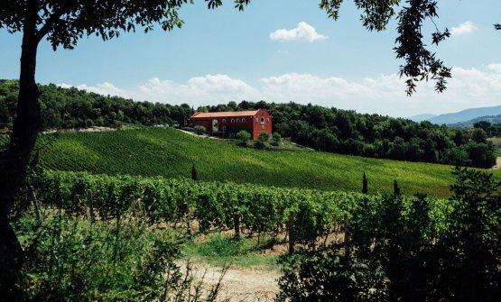 Caiarossa è un'azienda biodinamica, si trova a Riparbella in provincia di Pisa