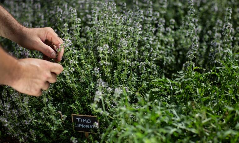 Matteo Morra ama molto utilizzare le erbe aromatiche