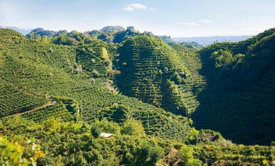 Le colline di Conegliano Valdobbiadene puntano al riconoscimento dell'Unesco