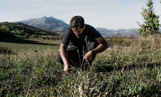 Alessandro Miocchi del ristorante Retrobottega di Roma,impegnato a raccogliere erbe spontanee in Abruzzo (foto di Matteo Bizzarri)