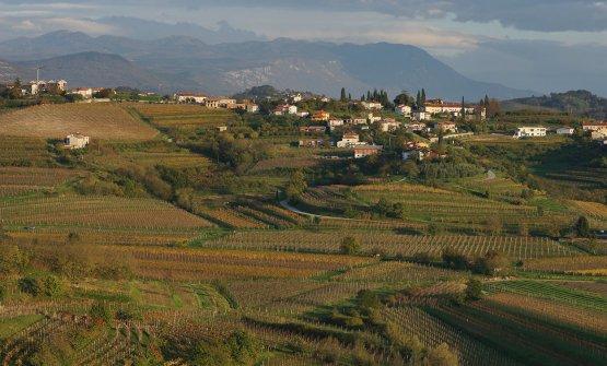 Vineyards in Medana