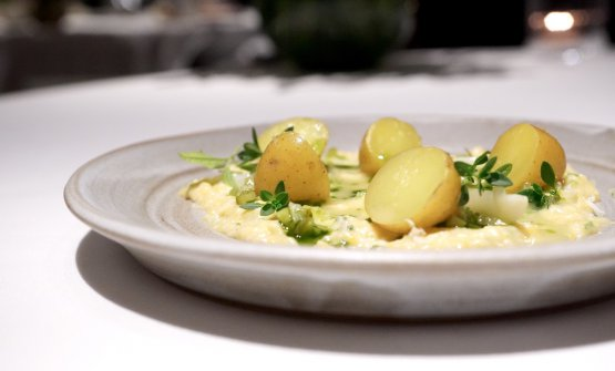 An off menu inspired by tradition: Potato & salsa bolzanina. The baby potatoes are cooked in buttermilk (they come from a vegetable garden in Brunico owned by a farmer who works with St.Hubertus), the sauce is made with strained egg, oil with chives, mustard, pickles and blanched garlic