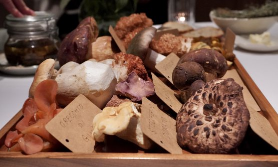 It's mushroom time at St.Hubertus...