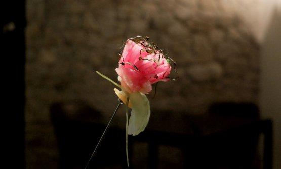Un fiore di verdure fermentate («In parte sotto sale, in parte 8 mesi sotto la crusca in cantina»)