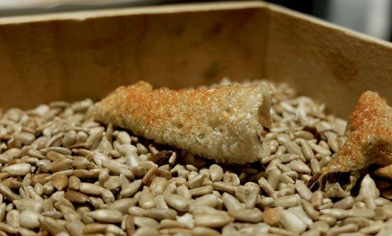 Chips di pelle di baccalà soffiata con paprika