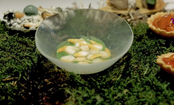 Clams in parsley cream