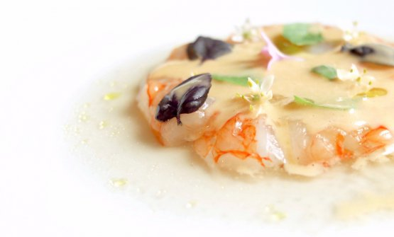 Prawns in brine: prawns from Sanremo, coulis made with their roasted heads, brine from taggiasche olives