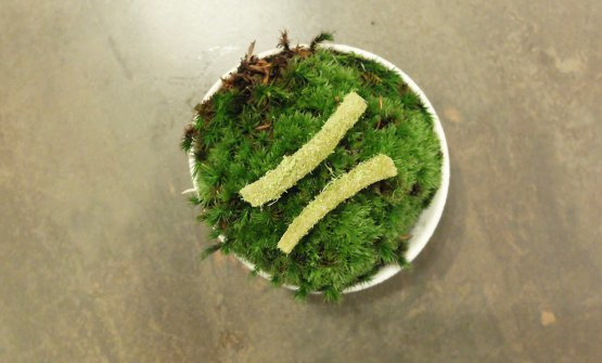 Caramelle di scorzonera con zucchero al pino