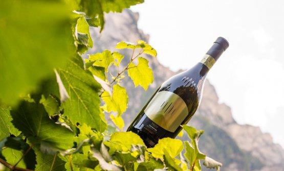 E' natoTroy, lo Chardonnay Riserva Südtirol Alto Adige di Cantina Tramin