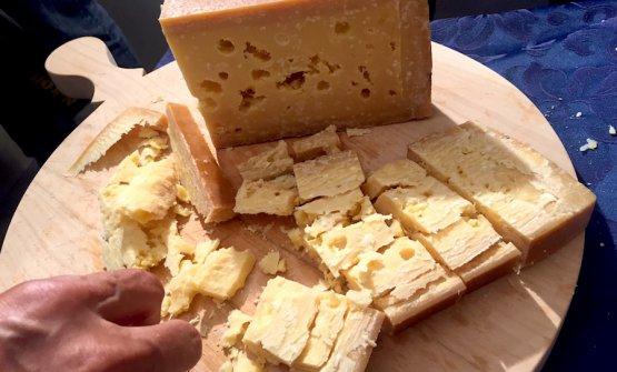 Una forma di formaggio nostrano della Val di Sole stagionato 10 anni