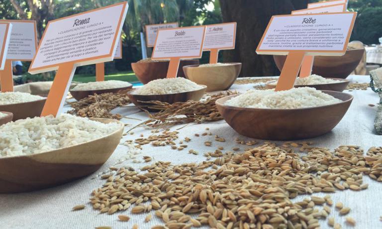 Non solo iI riso è una delle cinque specie alimen
