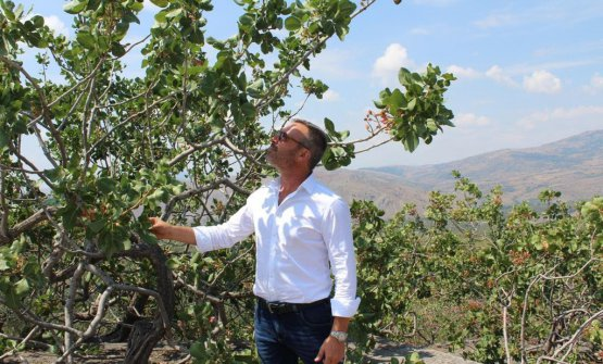 Nino Marino in pistacchieto