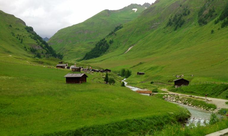 The total green of Valle Isarco, where cows and go