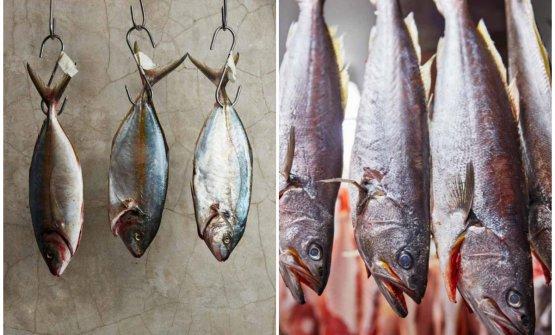 Maturazione del pesce