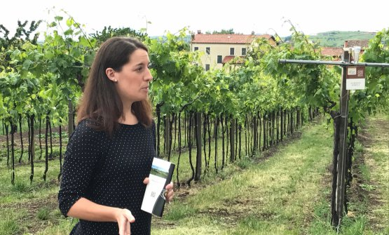 Giulia Franchetto in mezzo alle vigne dell'azienda