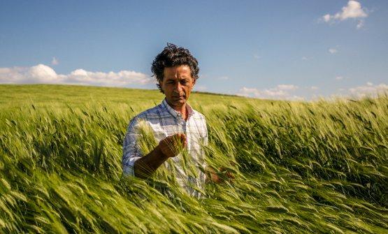 Giuseppe Li Rosi in un campo di grano. Salirà sul