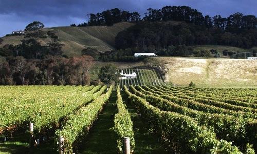 Uno scorcio di Hawke's Bay, una delle 16 regioni della Nuova Zelanda, costa orientale dell'Isola del Nord. Il vino spadroneggia nell'area e anche i ristoranti non scherzano. Il capoluogo è la città di Napier (foto www.capesouth.co.nz)