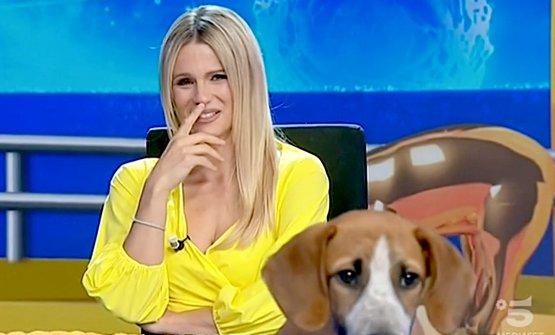 Michelle Hunziker ride vedendo Cookie fare la pipì nel corso della puntata di Striscia la notizia di martedì 5 maggio