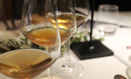 I vini diGiuseppe Cipolla