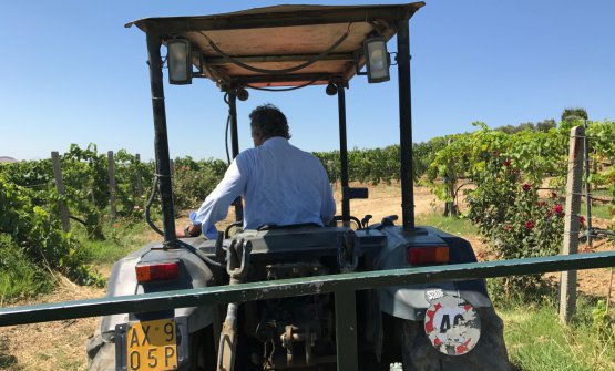 Roberto Ceraudo alla guida del trattore. Ci ha spiegato i nuovi progetti della sua azienda agricola a Strongoli, non lontano da Crotone