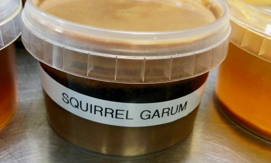 Garum di scoiattolo