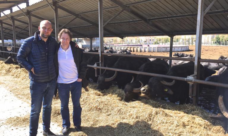 Jacques Genin (a destra) con Raffaele Barlotti davanti alle bufale dell'allevamento di quest'ultimo, a Paestum. Genin � stato tra i relatori a Le Strade della Mozzarella