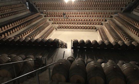 Una suggestiva immagine della barricaia progettata da Renzo Piano per Rocca di Frassinello